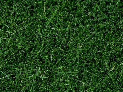NOCH 07094 <br/>Wildgras, dunkelgrün, 6 mm