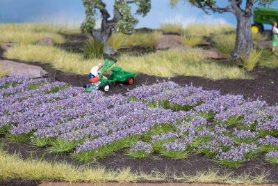 NOCH 07136 <br/>Lavendel