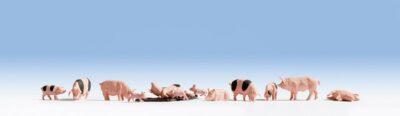 NOCH 15712 <br/>Schweine