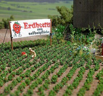 BUSCH 1265 <br/>Erdbeerpflanzen 1
