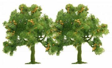 BUSCH 6628 <br/>Apfelbäume, 2 Stück 1