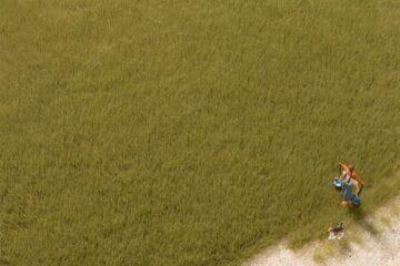 Auhagen 75614 <br/>Grasfasern oliv 4,5 mm 1