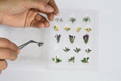 NOCH 14056 <br/>L-C Feld- u.Wiesenpflanzen